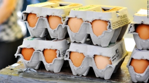 t1large-egg-cartons-ts